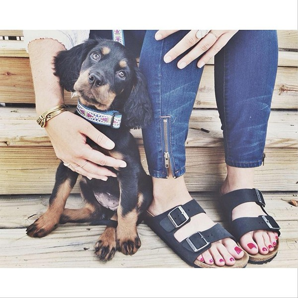 You can never go wrong with puppies or Birkenskocks <3