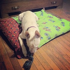 Betty's New Bed