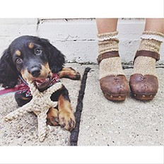 Clogs-Dogs-