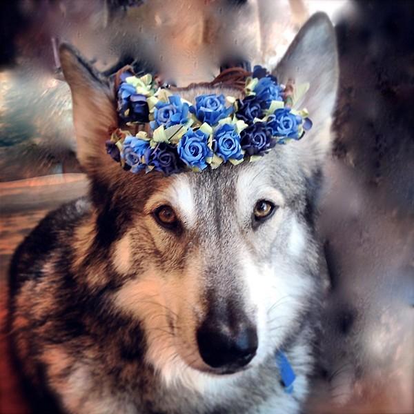 Bun Floral Crowns style pic