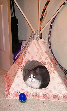 Printed Cat Tipi style pic