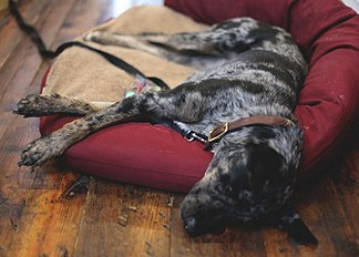 Catching some ZZZs...Natural Rope Collar
