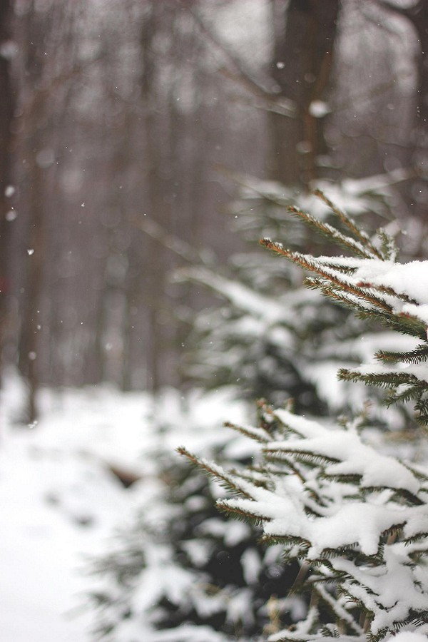 #fpWinterWanderer #winter